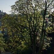 bomen klimmen groningen